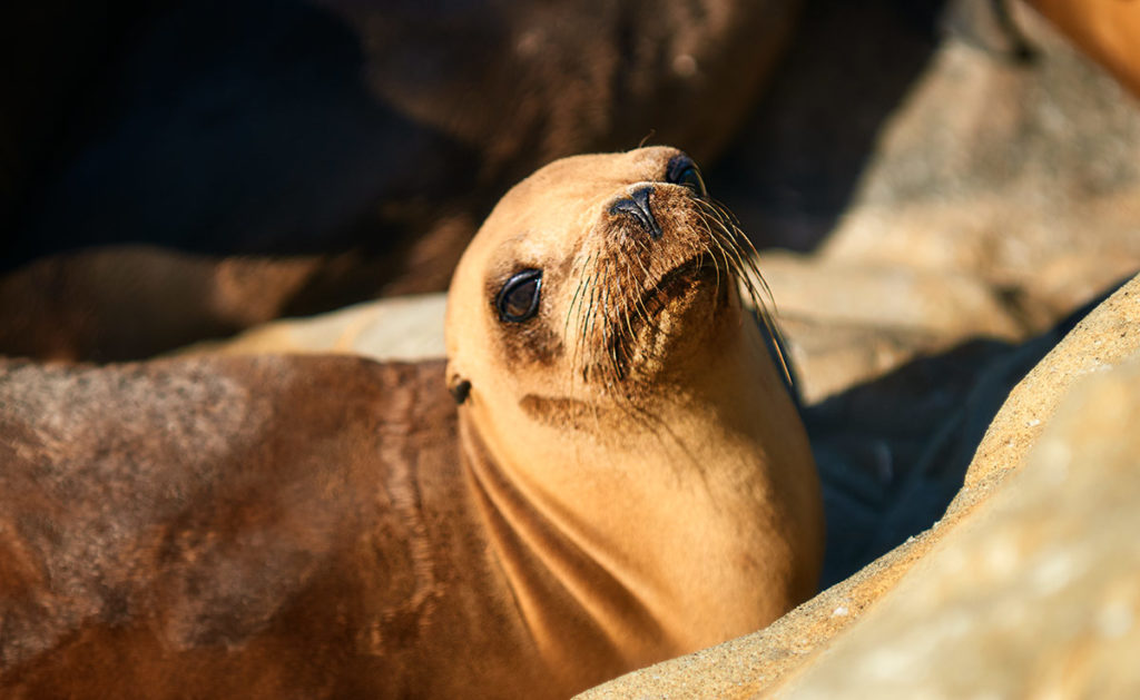 Photo of California sea lion, La Jolla, California, by visionbypixels.com