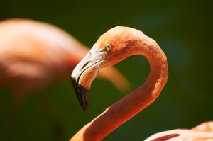 Photo of flamingo, San Diego, California, by visionbypixels.com