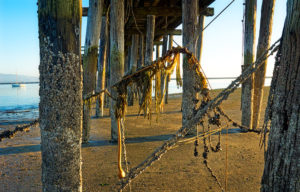 Photo of pier at Half Moon Bay, California by visionbypixels.com