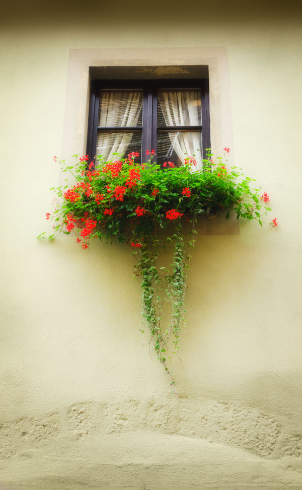 Photo of a box planter in a window, Rothenburg ob der Tauber, Germany, by visionbypixels.com