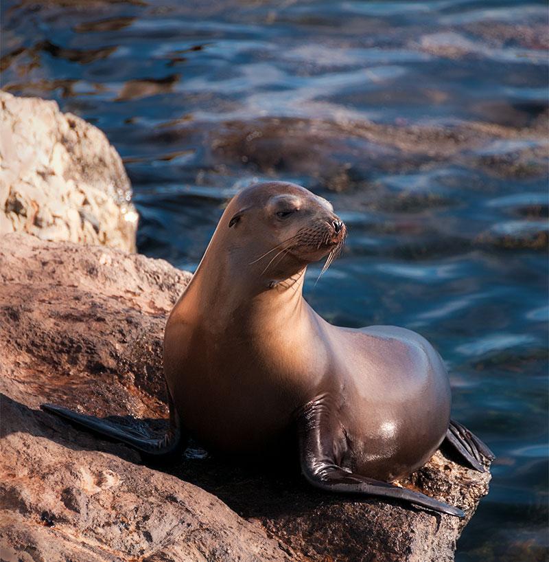 Wet Seal Seaside